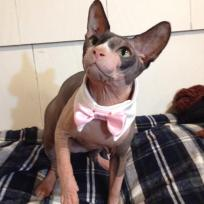 "Ori is putting on his best with a real mens shirt"" collar"" and a pink satin bow tie to match the tutu."